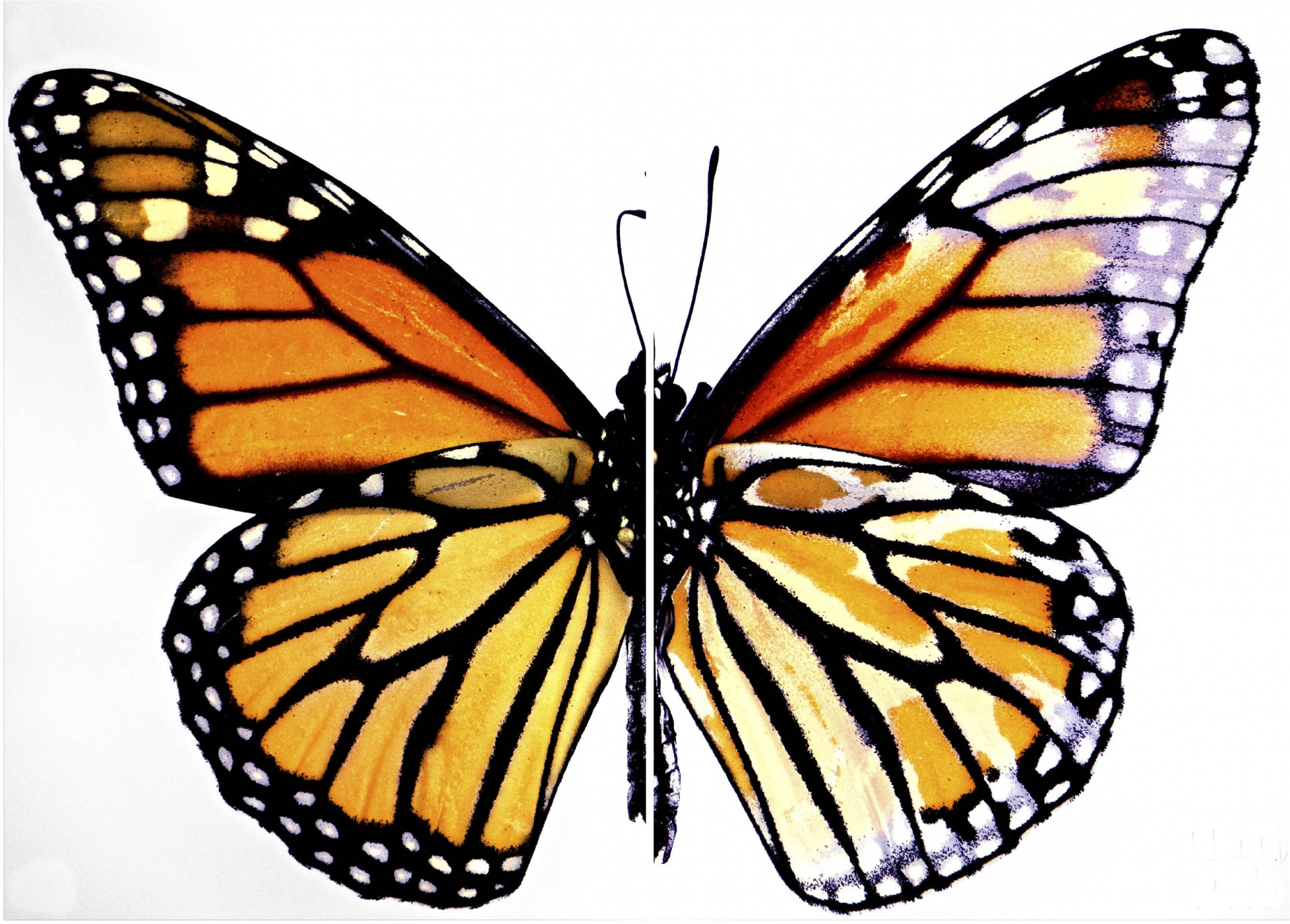Researcher Uses Gene Editing to Unveil Butterfly Biodiversity | GW ...