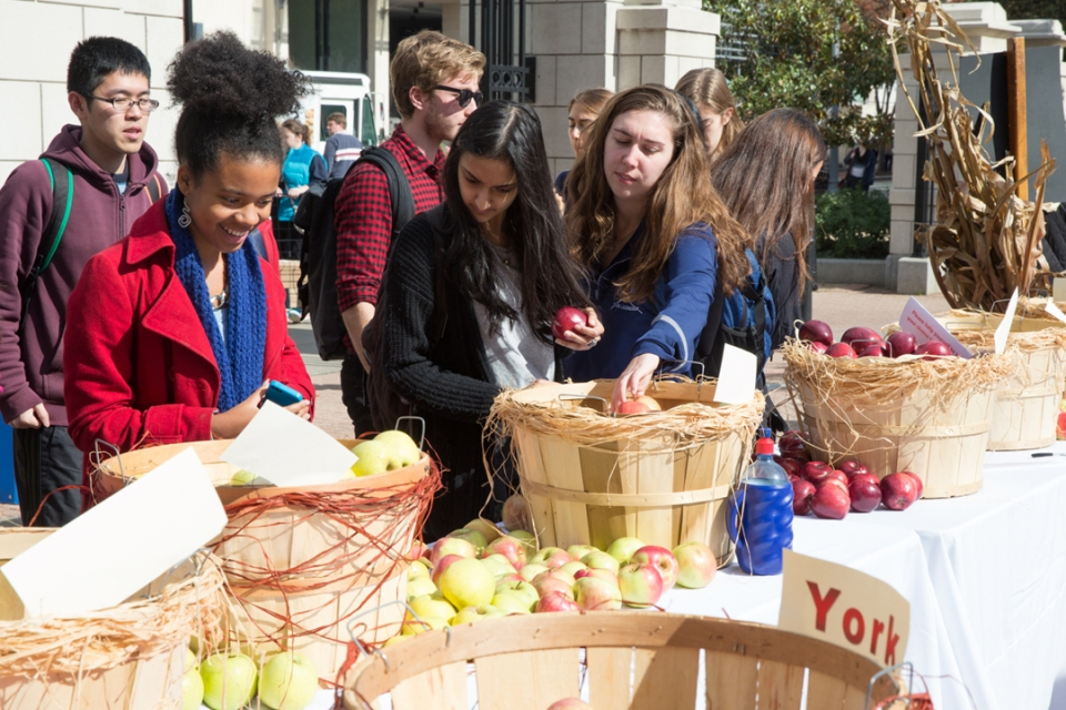 Students at apple day putting apples into bins