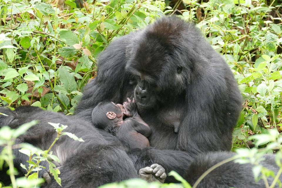 ape weaning project