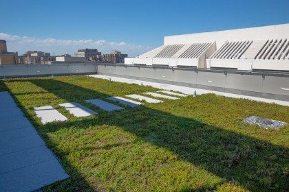 SEH green roof